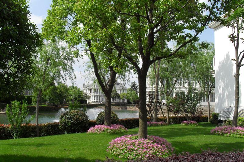 东郊花园--东郊别墅二手房-上海二手别墅出售房益阳花园二手图片